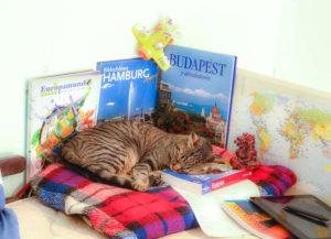 La gata Jerry durmiendo sobre mapas, libros y apuntes de viaje.