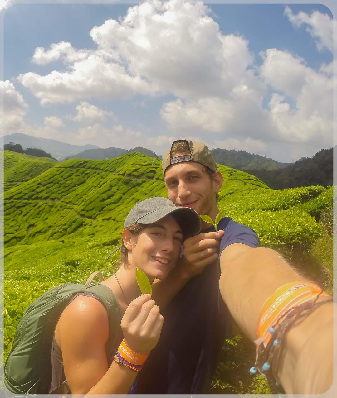 Paseando por los campos de te de Cameron Highlands en Malasia