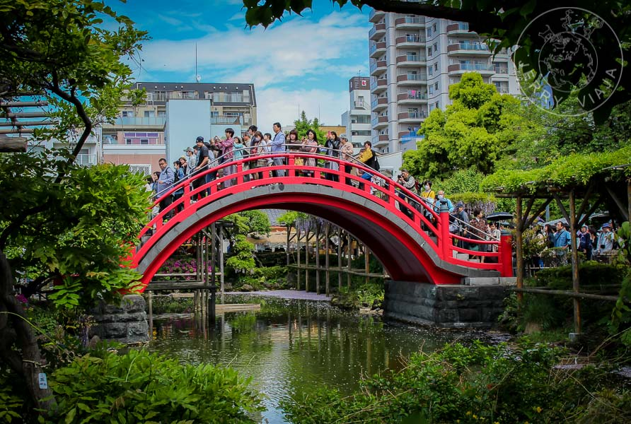 Personas cruzando el puente al templo Kameido Tenjinsha