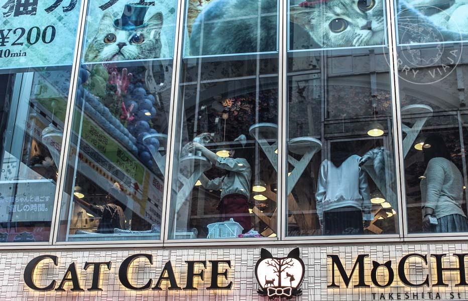 Cat Cafe en Tokio