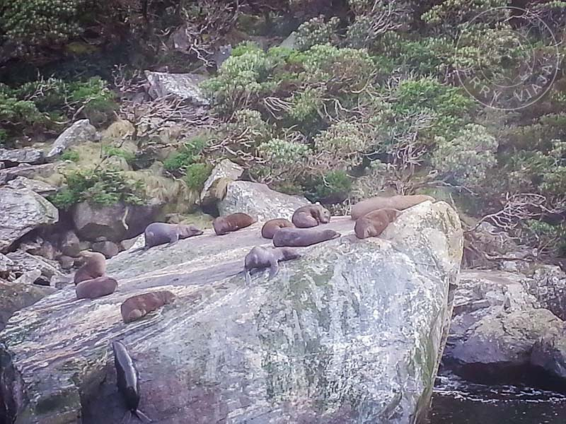 Lobos marinos descansando al sol