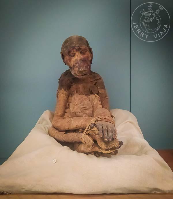 Momia de un mono en el Museo Egipcio