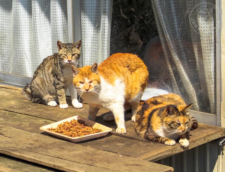 Gato calicó, Japón