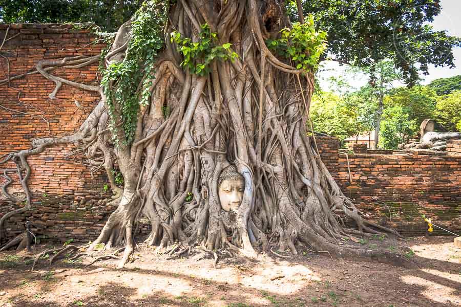 Guía: Qué ver en Ayutthaya. Wat Mahathat, Ayutthaya, Tailandia